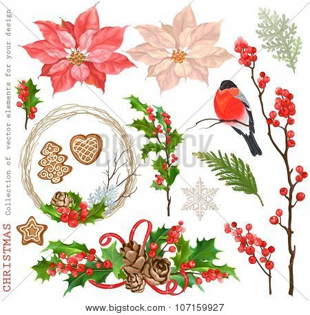 Christmas Collection of decorative vector elements with flowers Poinsettia, dry branches, holly, winter red berries, bullfinch and cookies, for your design.