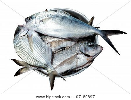 Fish Sparus Aurata  In Metal Plate