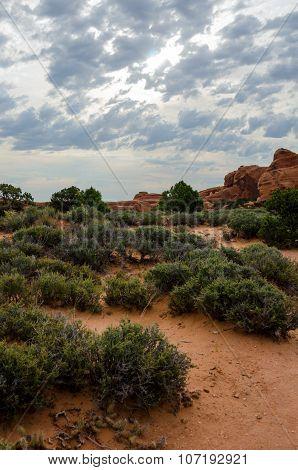 Desert Landscape In Arches