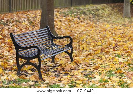 Loss or bereavement concept empty park bench surrounded by trees and golden Autumn or Fall leaves