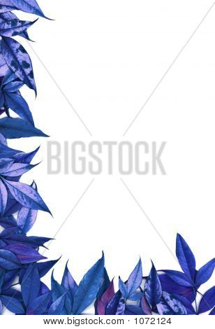 Surreal Blue Nandina Leaves