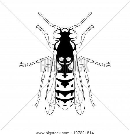 Wasp. Sketch Of Wasp. Wasp Isolated On White Background. Wasp Design For Coloring Book.  Hand-drawn