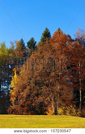 Trees With Autumn Colors - Trentino Italy