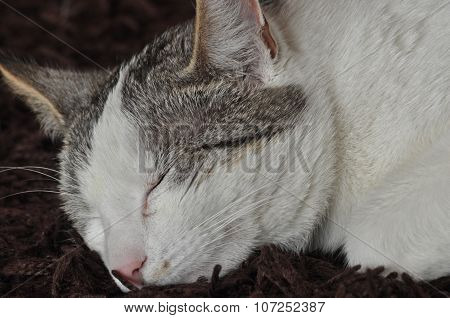 The Sleeping And Purring Cat. Pet. Rest And Relaxation.