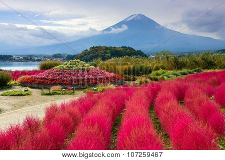 Fuji Mountain, Japan with kokia bushes at Oishi Park.