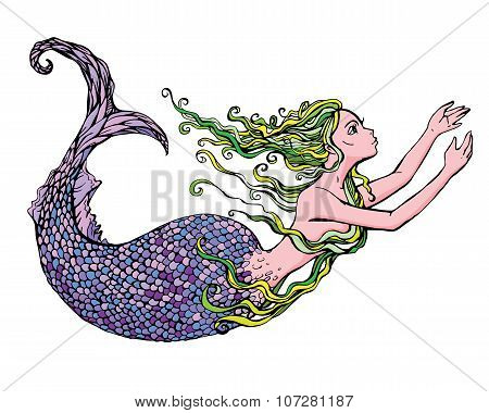 Hand drawn Illustration of a Beautiful mermaid girl isolated on white background. poster
