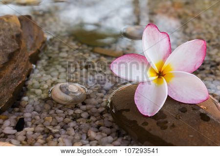Touching nature with relaxing and peaceful with flower plumeria or frangipani decorated on water