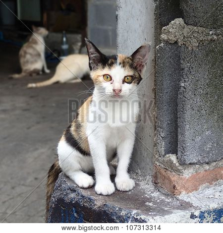 The homeless tricolor kitten in the slums, Thailand poster