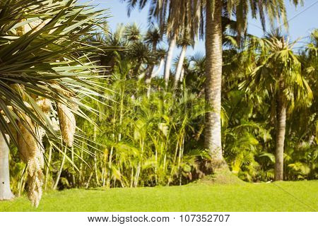 Background With Palm Trees In An Exotic Park, Loro Parque, Tenerife
