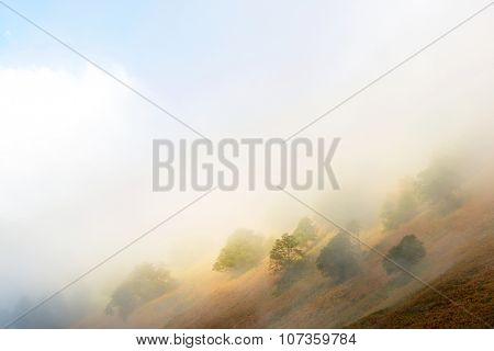 Fog and trees in Aspe Valley, Pyrenees National Park, Pyrenees, France.