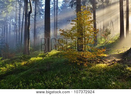 sunbeams in the autumn forest