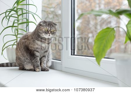 Cat Sits On The Windowsill And Looks Out The Window.