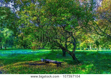 Branchy Trees With Bench Among Green Grass