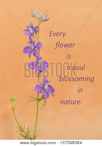 Every flower is a soul blossoming in nature - quote with a Larkspur flowering against light orange background