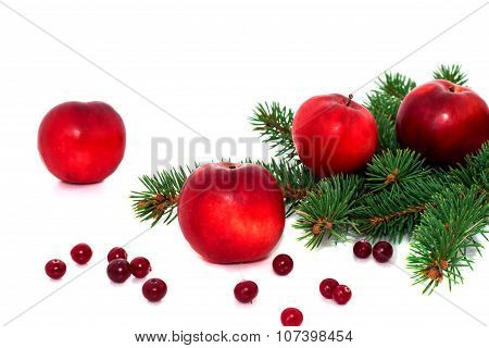 Red Apples, Cranberries And Spruce Branches.