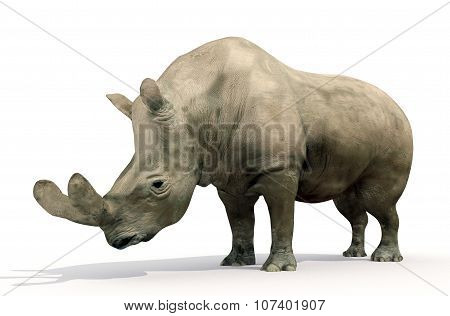 Brontotherium On White Background