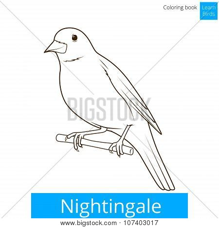 Nightingale learn birds coloring book vector