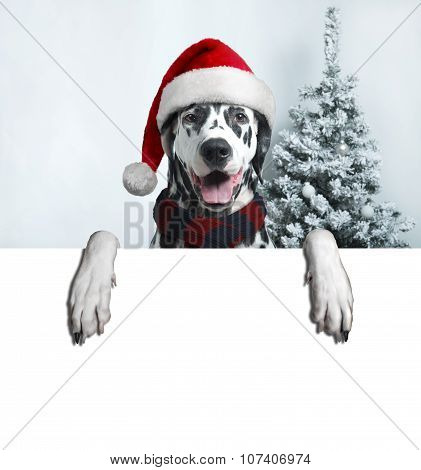 Santa Dog With  Christmas Ball On Paw And A Bell
