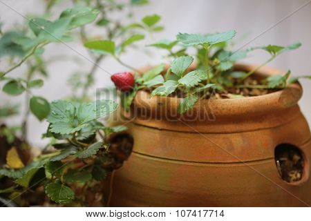 Clay Strawberry Pot with Patina