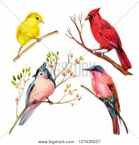 Watercolor Bird Set: Red Northen Cardinal, Tufted Titmouse, Yellow Warbler And Bee-eater
