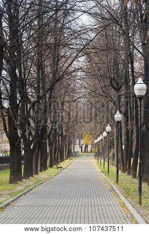 Autumnal Linden Alley