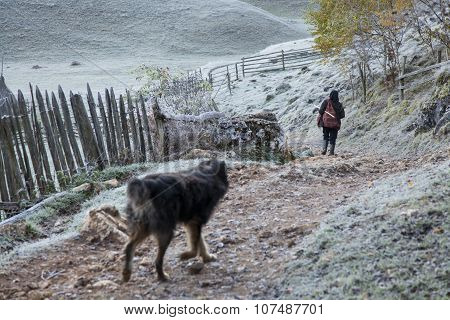 Woman And Dog On Path