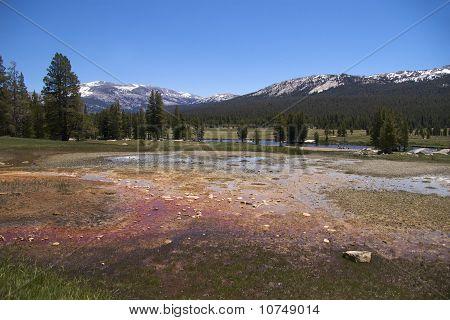 Pine trees & snow-clad mountains, Soda Springs, Yosemite