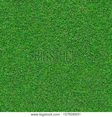 Seamless Green Grass Background