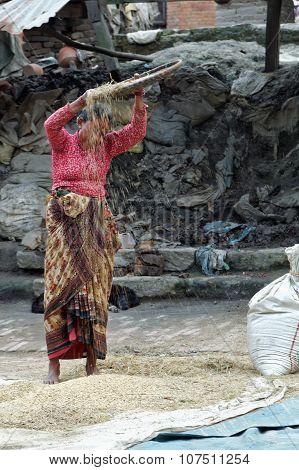 Wind Winnowing Rice In Nepal