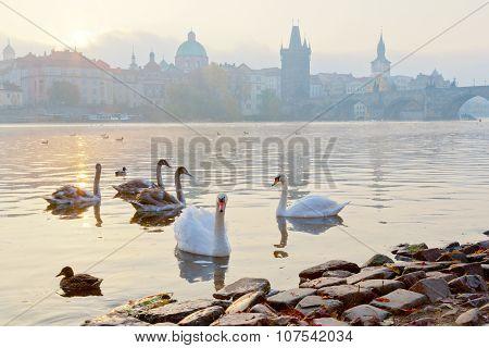 Moldau River Embankment In The Early Morning, Lesser Town, Kampa, Prague, Czech Republic