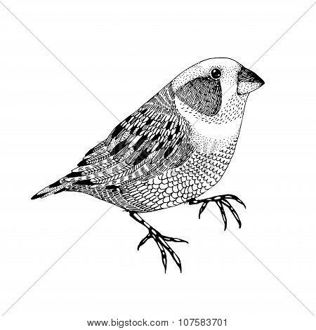 Vector Abstract Hand Drawn Small Bird