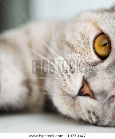 Close-up of a very beautiful cat