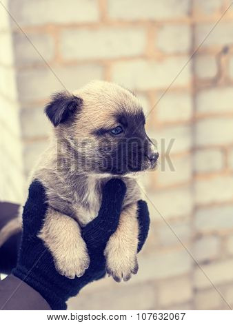 puppy in her arms, puppy orphan, black dog. Vintage colur poster