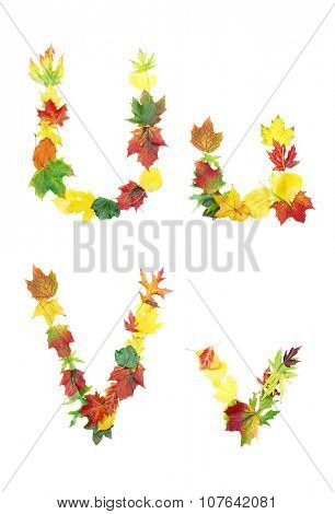 Font made of autumn leaves isolated on white. Letters u and v.
