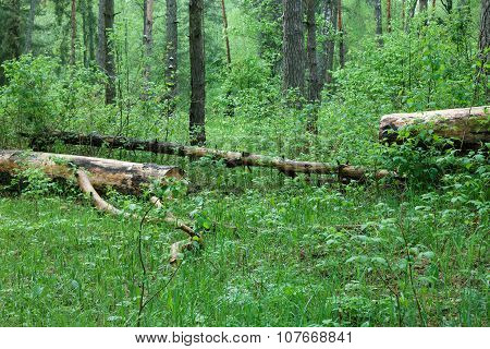 Spring Wild Forest, Covert.