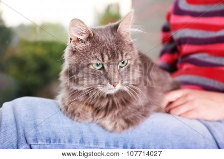 poster of Grey lazy cat sitting on woman's knees near window