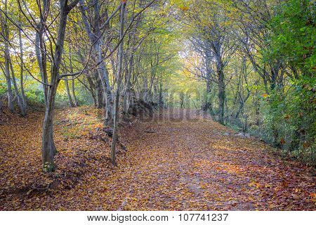 Autumn And The Woods