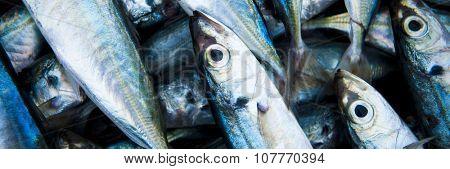 School Of Fish Caught Dead Freshness Concept