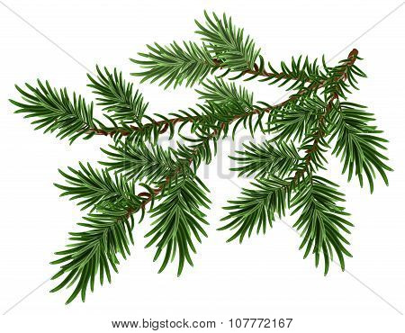 Fur-tree branch. Green fluffy pine branch. Isolated on white vector illustration poster