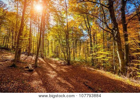 Majestic particolored forest with sunny beams. Dramatic and picturesque morning scene. Red and yellow leaves. Warm toning effect. Carpathians. Ukraine, Europe. Beauty world.