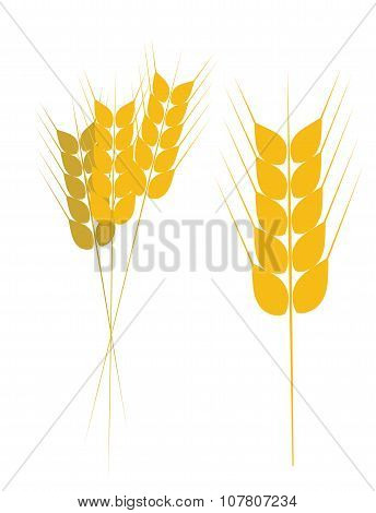 Field of Wheat, Barley or Rye