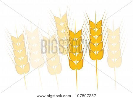 Field of Wheat, Barley or Rye