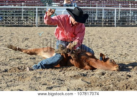 Cowboy Tying Up Calf