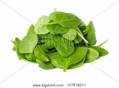 Leaves Of Spinach Isolated On White Background