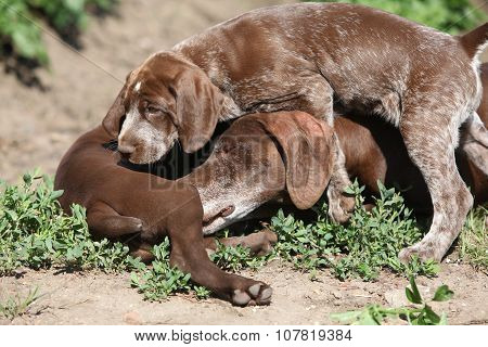 Amazing bitch playing with its puppies in nature poster
