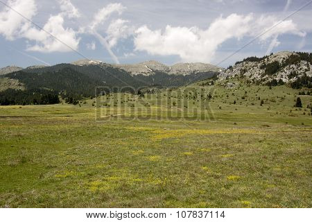 Oiti Mountain Meadows