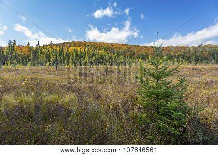 Beaver Meadow In Autumn - Ontario, Canada