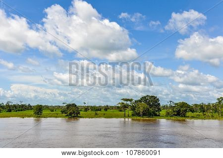 Flooded Forest On The Amazon River, Brazil