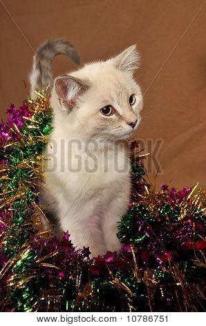 Really cute christmas kitten