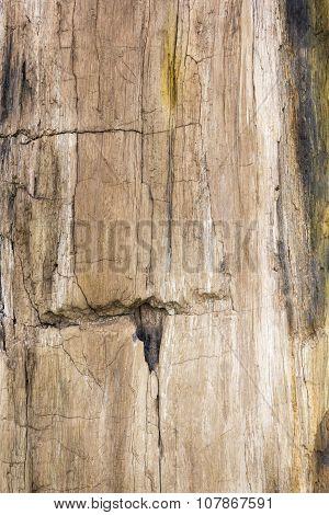 Petrified Wood Texture Background